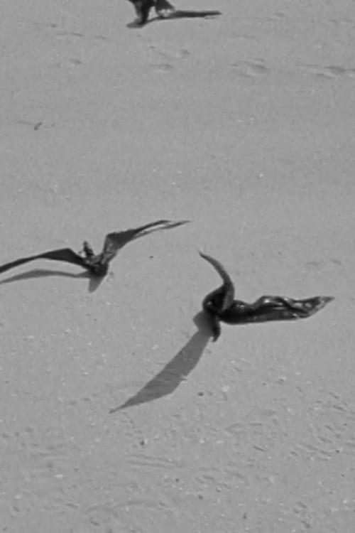 Birds of Prey (1992)