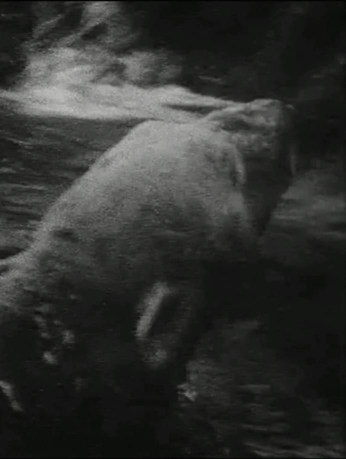 Ver Polar Bear Online HD Español ()
