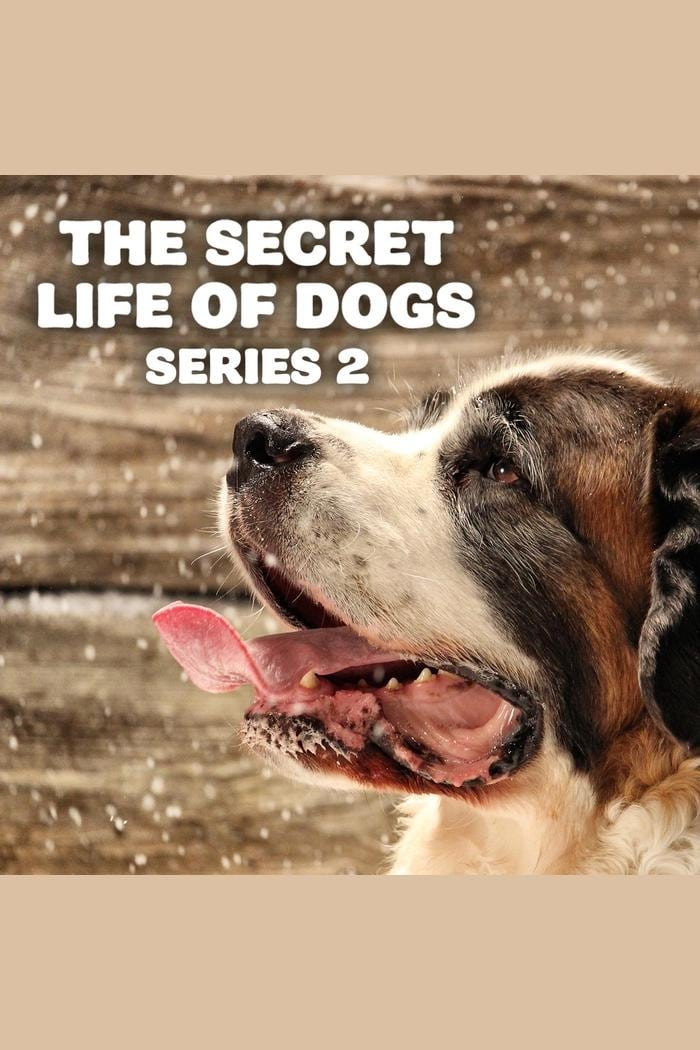 The Secret Life of Dogs TV Shows About Dog