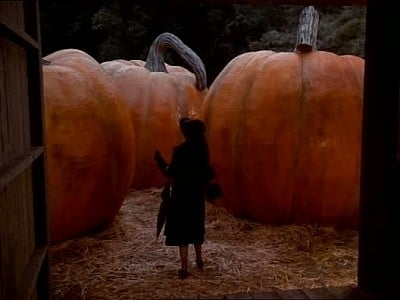 The Pumpkin Competition-Azwaad Movie Database