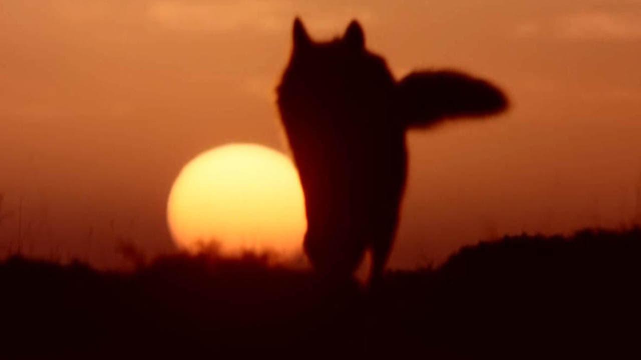 Dark Shadows Season 6 :Episode 68  DS-528