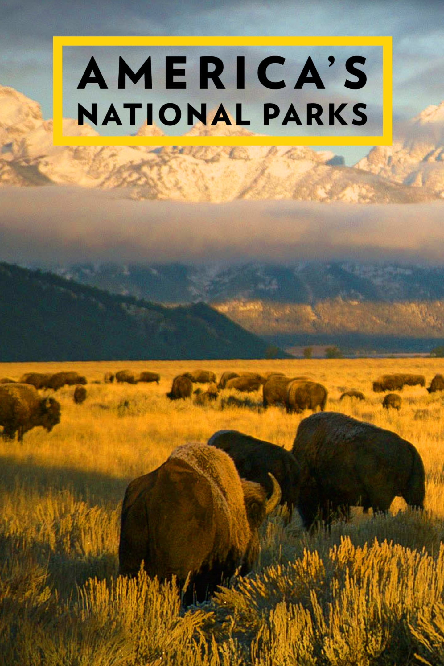 America's National Parks TV Shows About Wildlife
