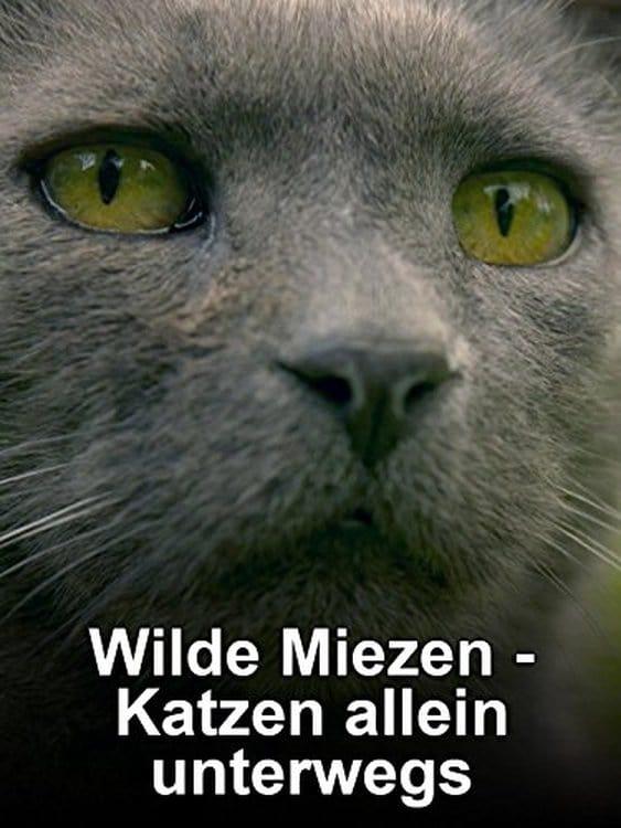 Ver Wilde Miezen – Katzen allein unterwegs Online HD Español ()