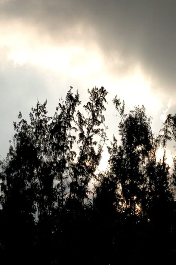 Ver Changing Landscapes Online HD Español ()