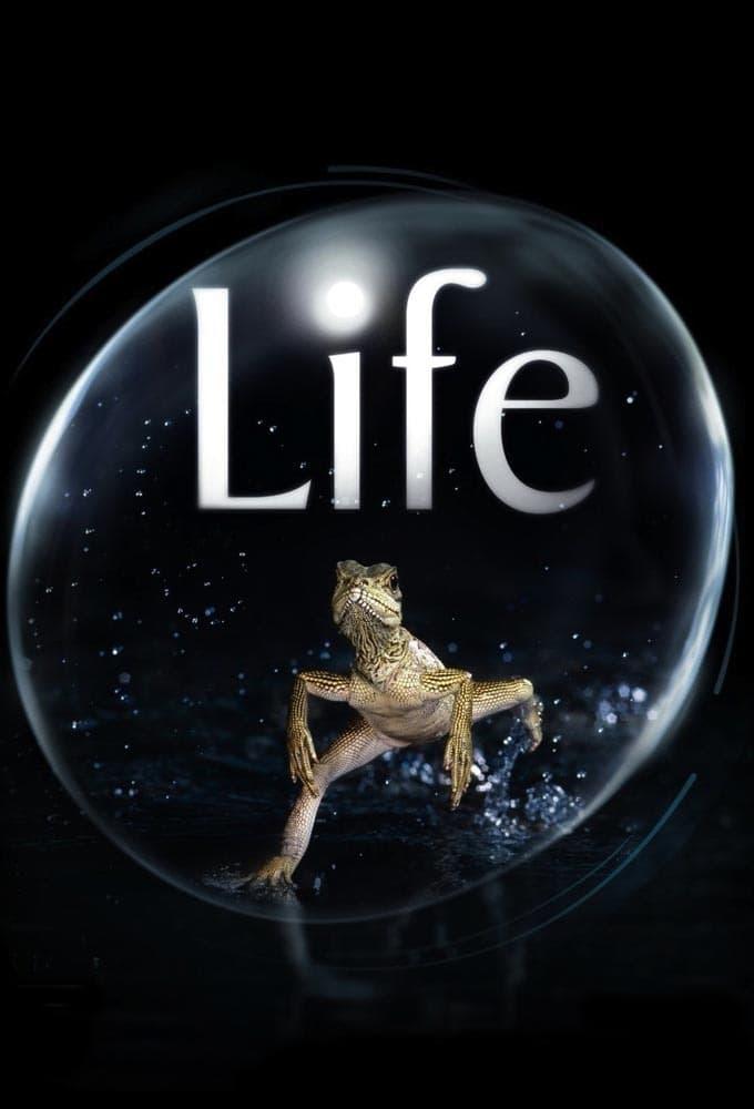 Life (BBC)