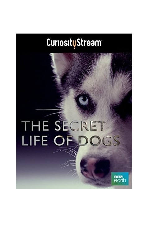 Secret Life of Dogs (2013)