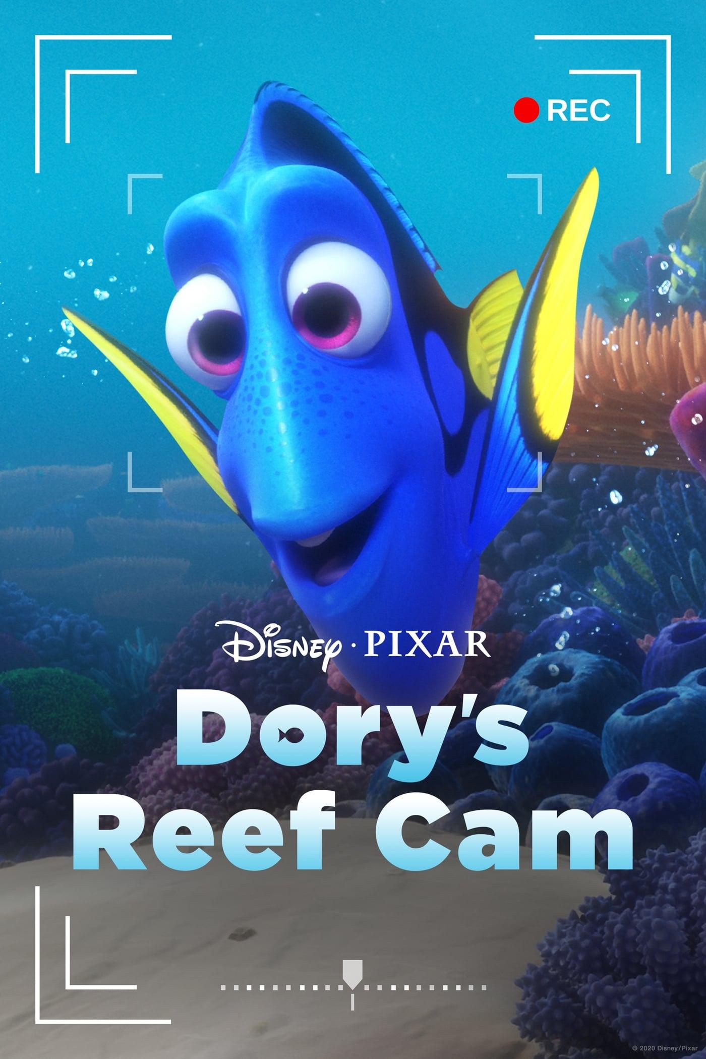 Watch Dory's Reef Cam Online