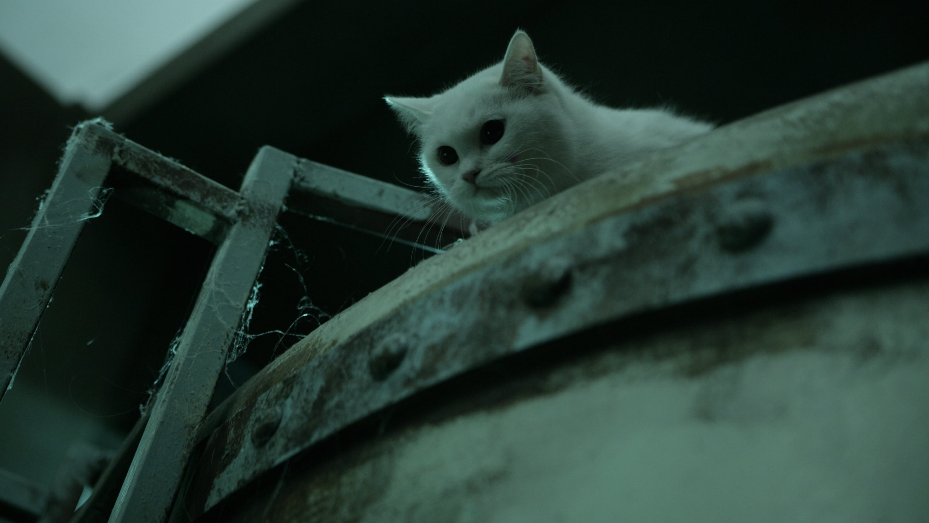 고양이: 죽음을 보는 두 개의 눈 (2011)