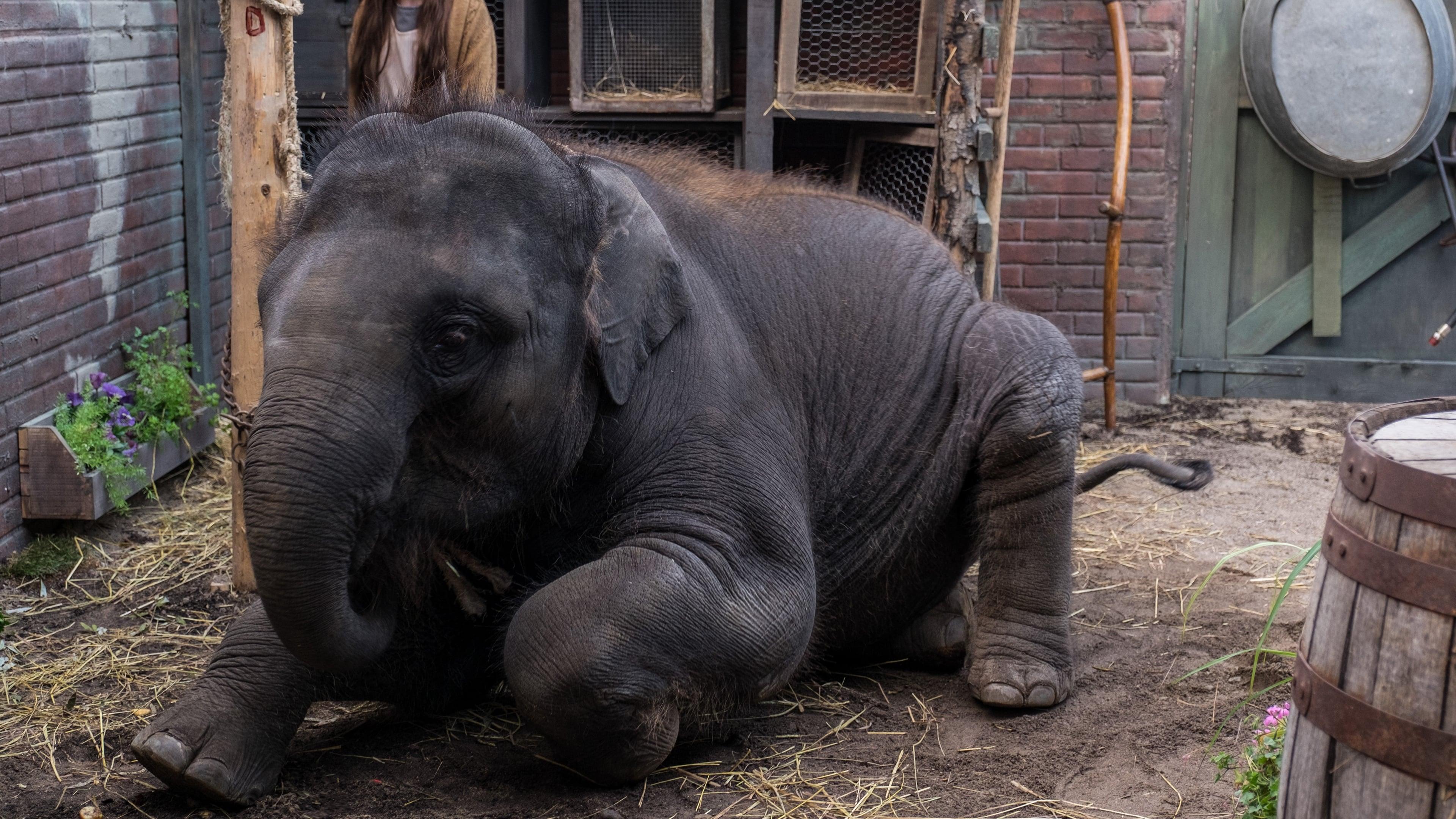 Открытки из зоопарка смотреть онлайн