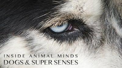 NOVA Season 41 :Episode 18  Inside Animal Minds: Dogs & Super Senses