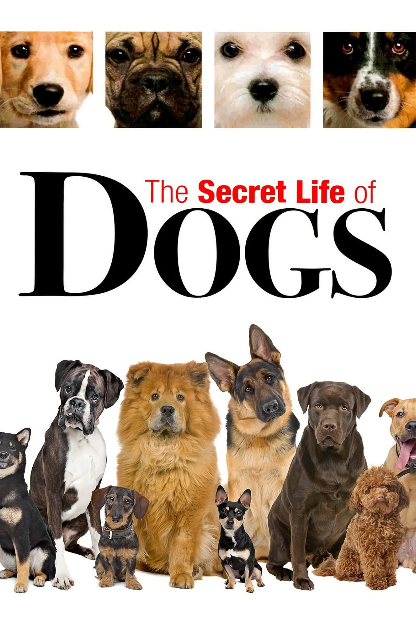 Secret Life of Dogs (2017)