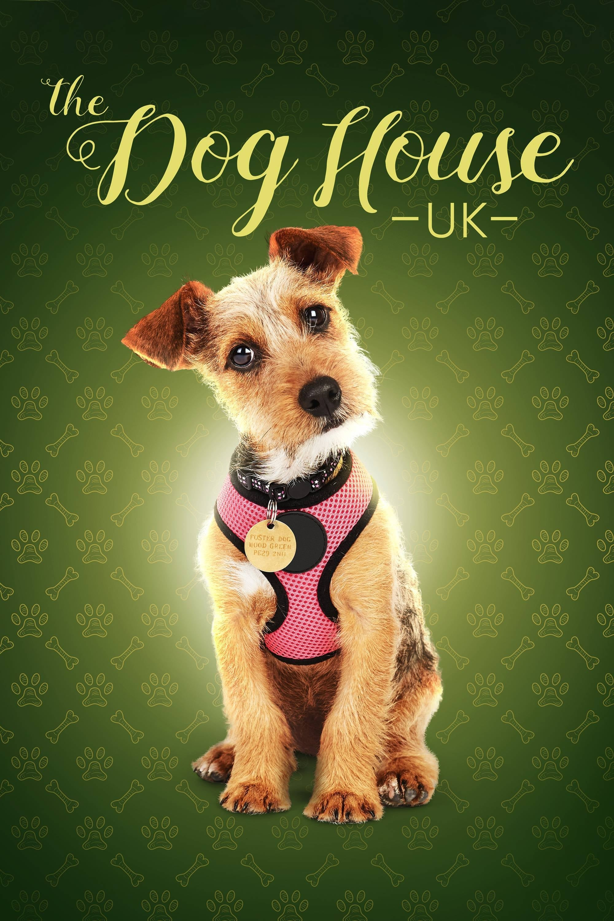 The Dog House TV Shows About Dog