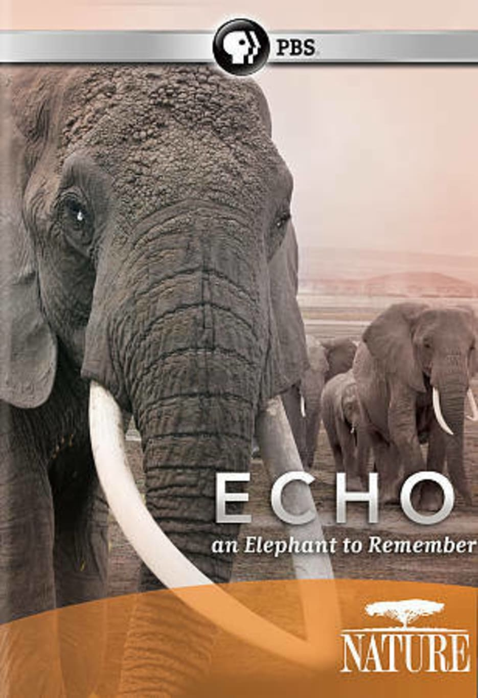Nature: Echo An Elephant to Remember (2010)