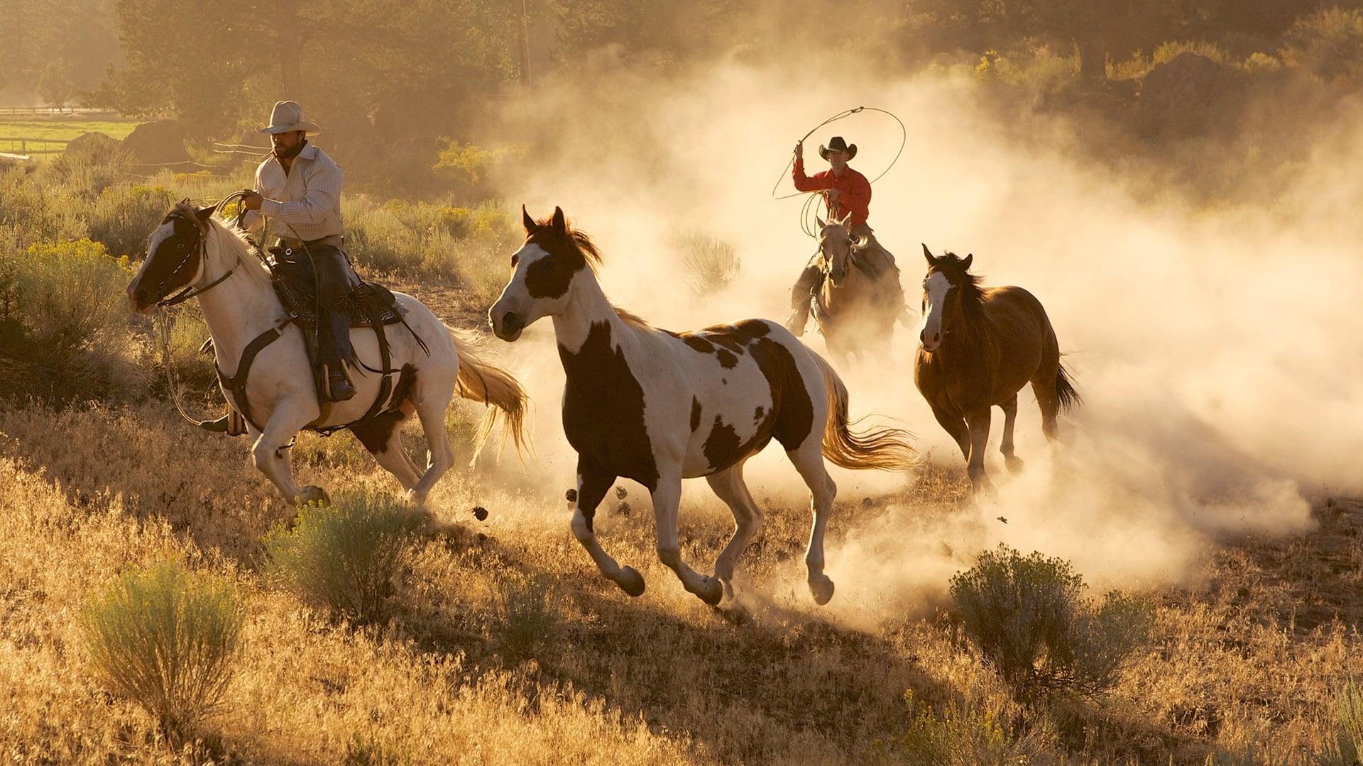 картинки дикого запада диких лошадей домочадцы были приятно