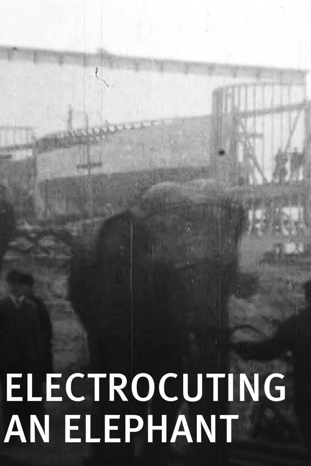 Electrocuting an Elephant (1903)