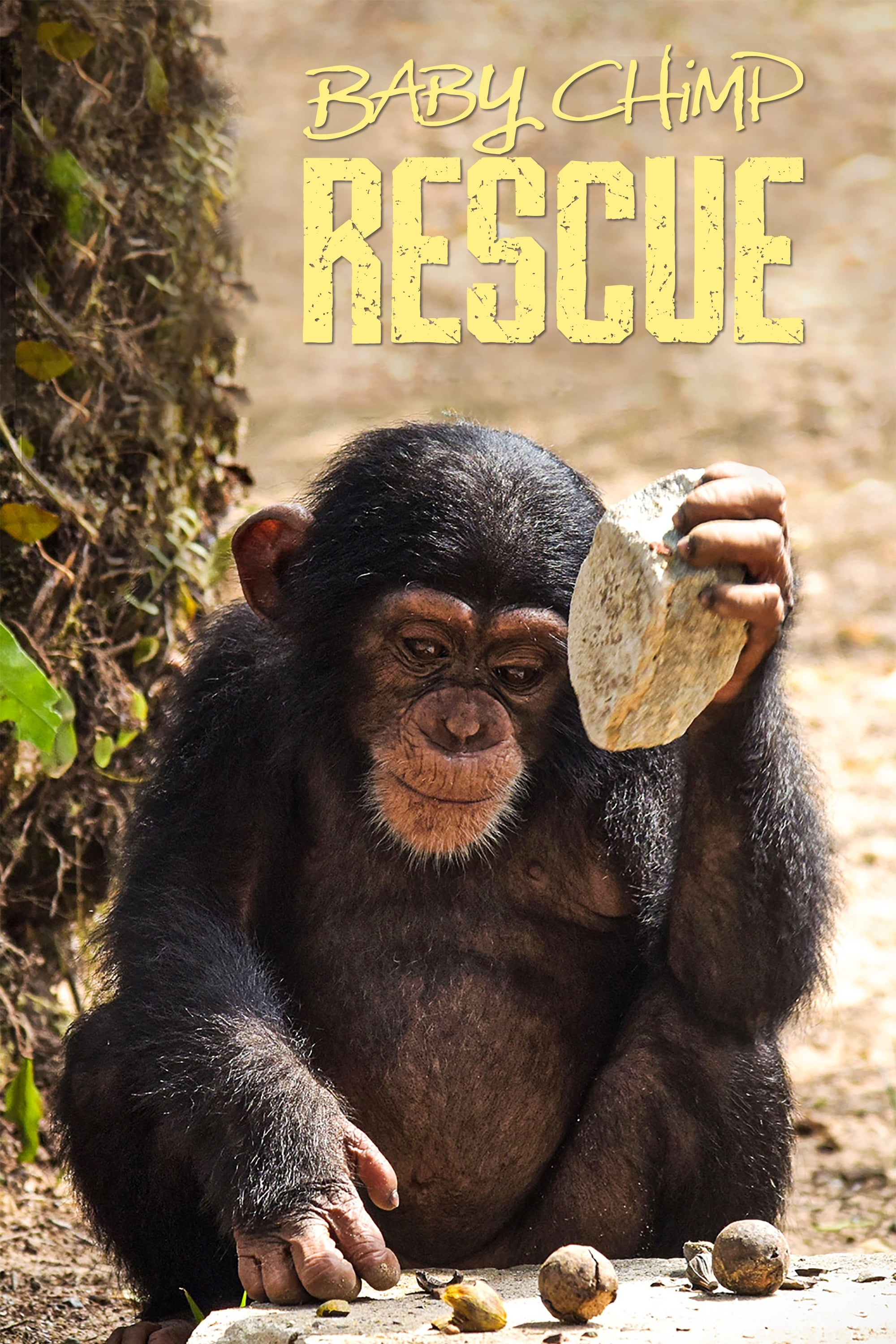 Baby Chimp Rescue TV Shows About Orphan