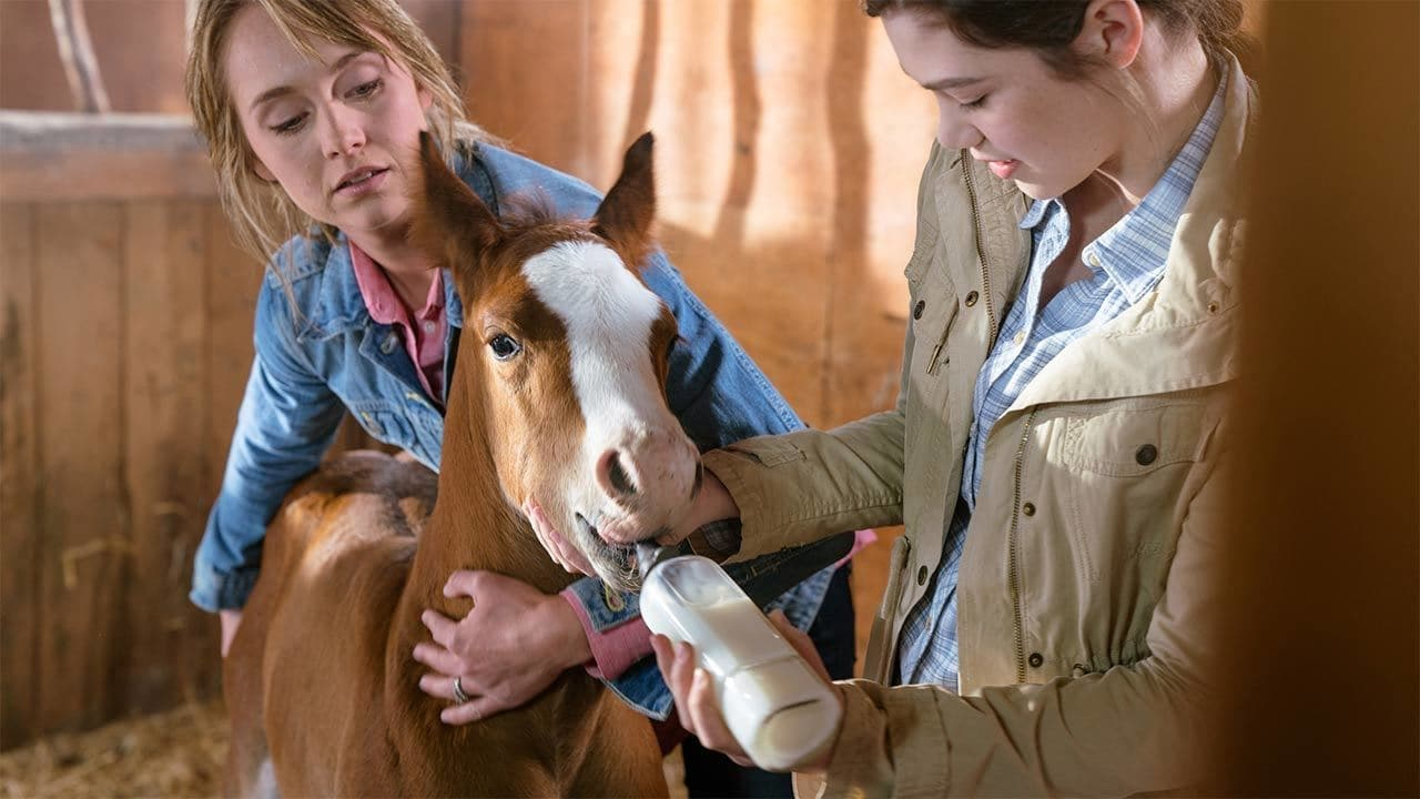 Heartland - Season 10 Episode 2 : You Just Know