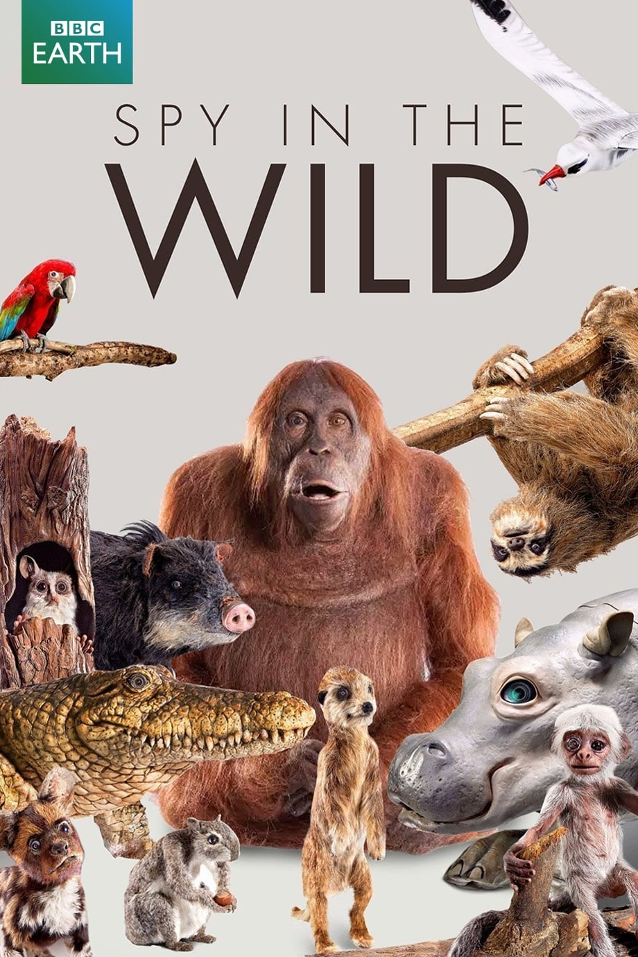 Spy in the Wild TV Shows About Wildlife