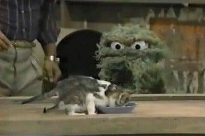 Sesame Street Season 18 :Episode 13  Episode 522