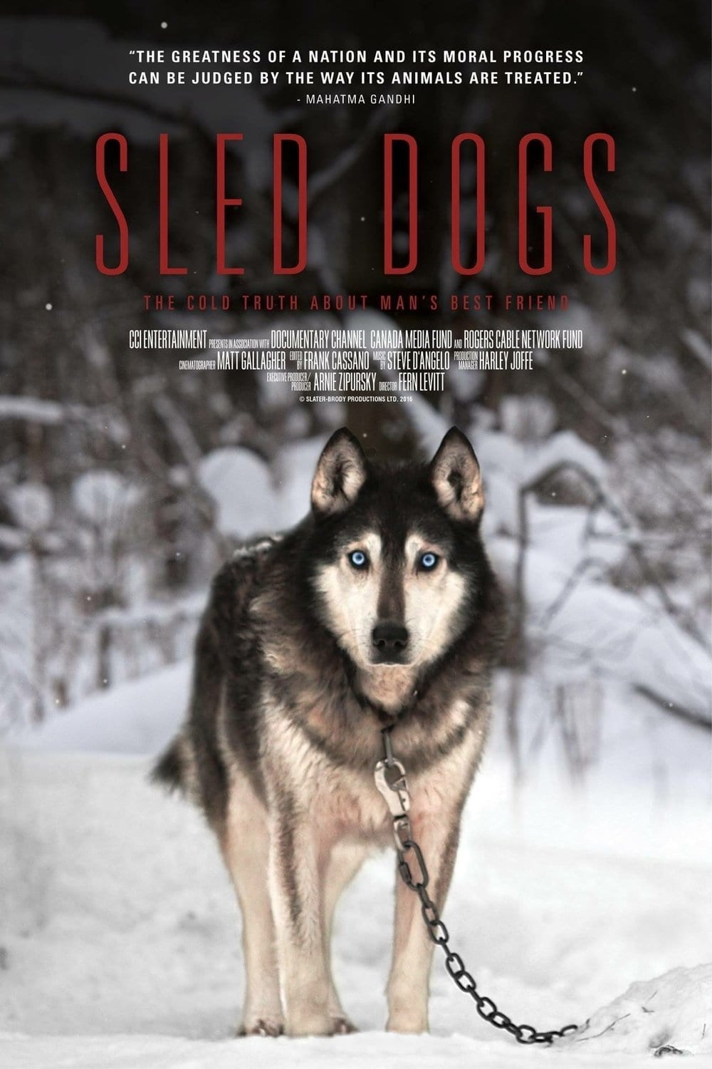 Sled Dogs on FREECABLE TV