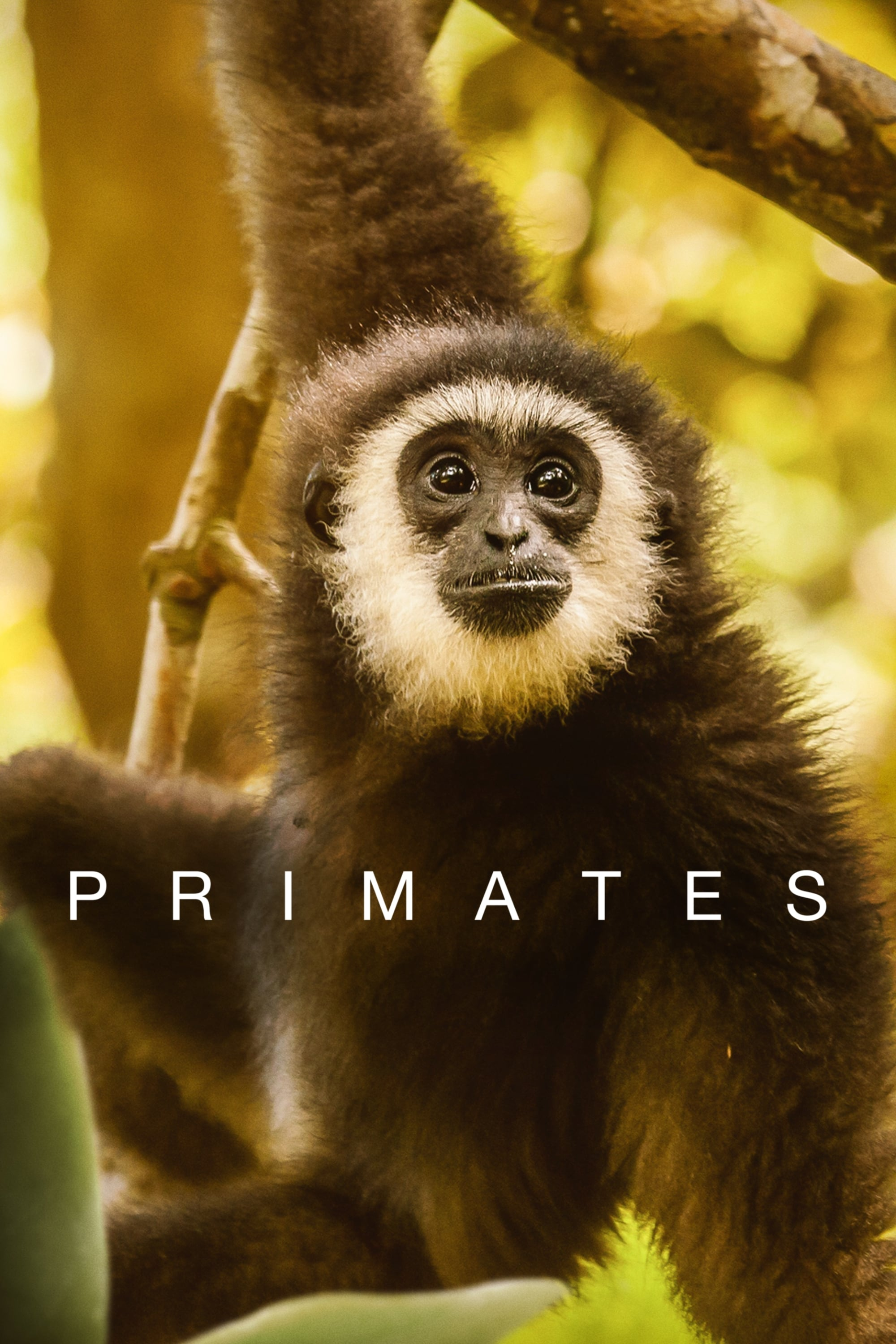 Primates TV Shows About Nature Documentary
