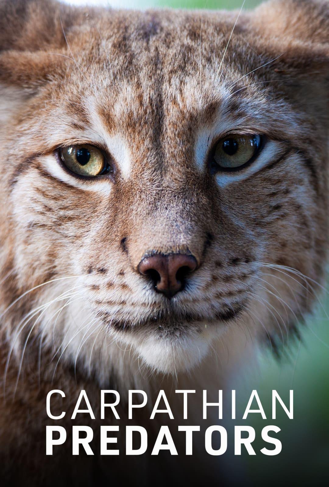 Carpathian Predators TV Shows About Mountain