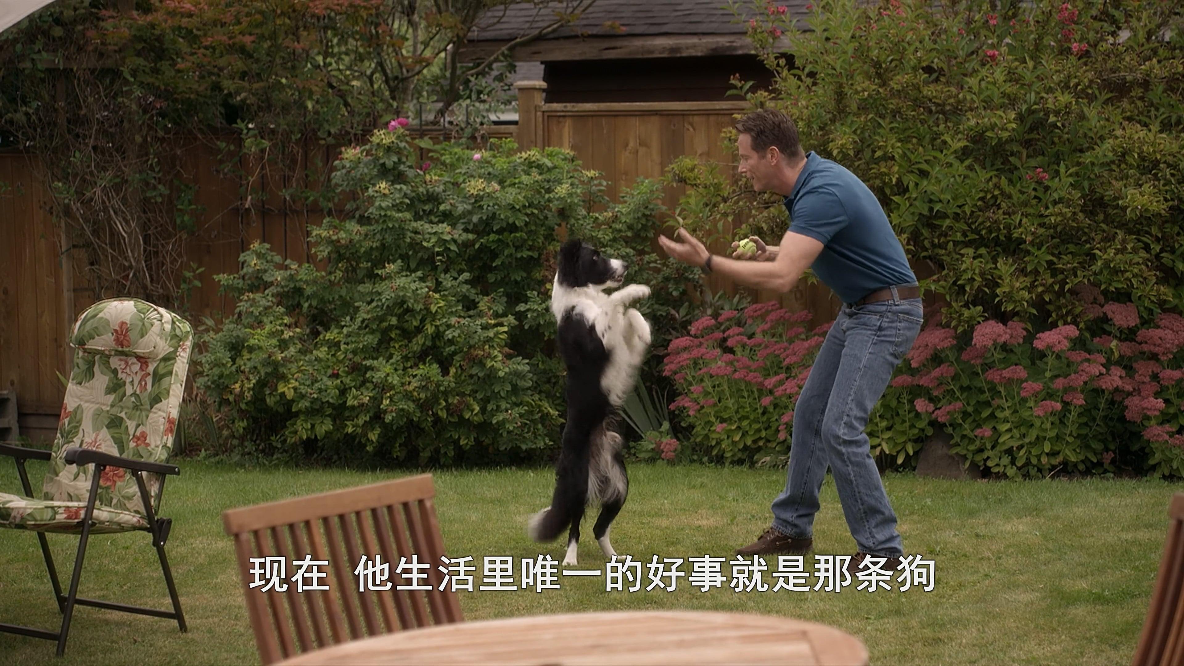 ein hund namens beethoven kostenlos anschauen