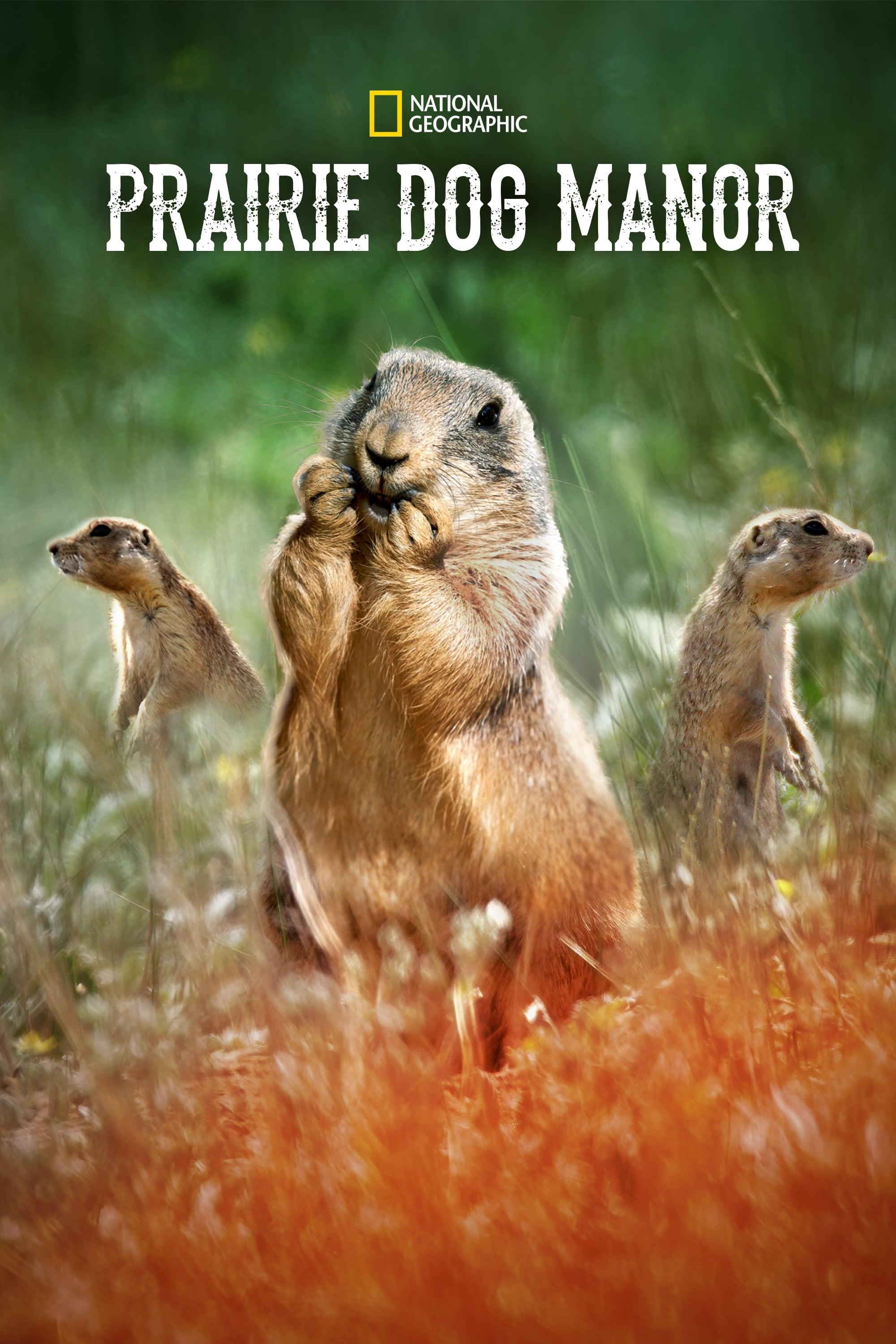Prairie Dog Manor TV Shows About Dog