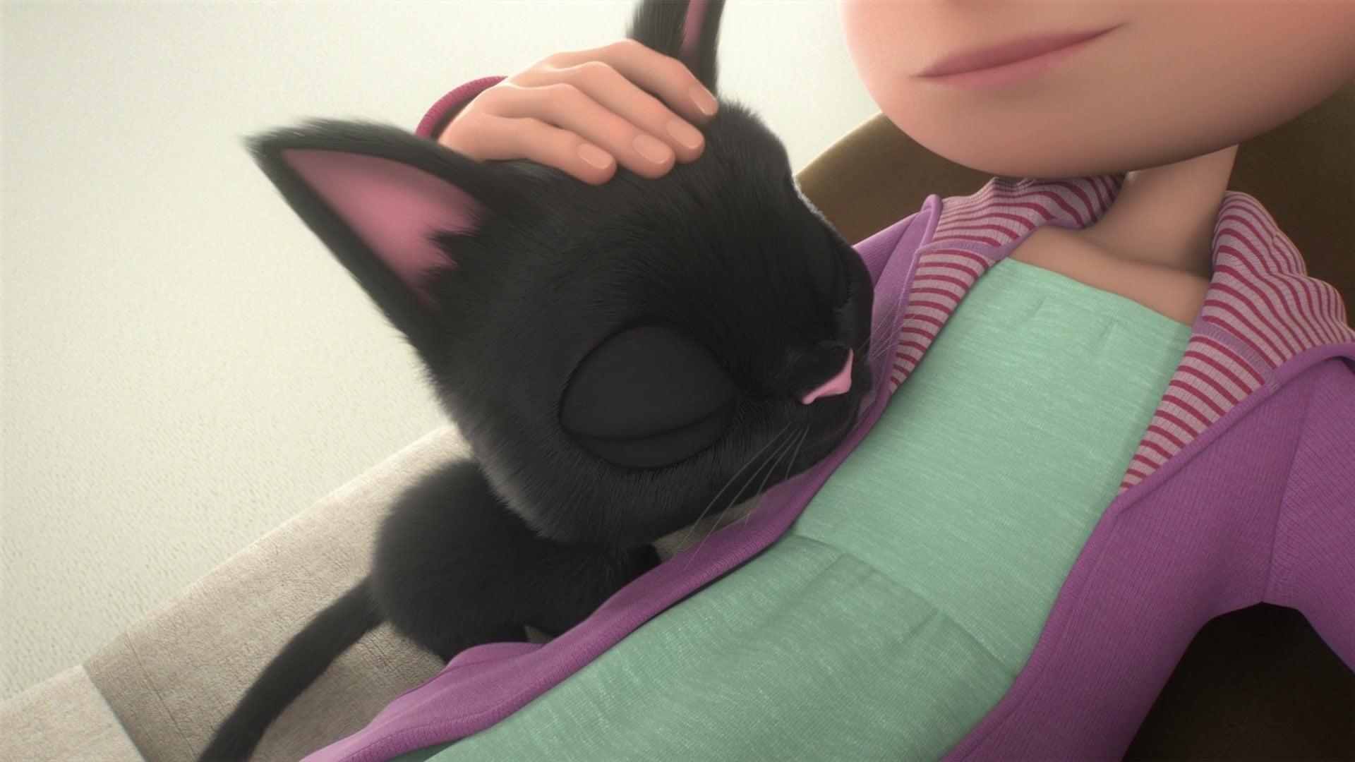 Schwarze Katze Weißer Kater Ganzer Film