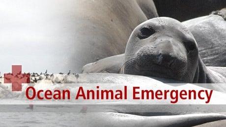 NOVA Season 36 :Episode 7  Ocean Animal Emergency