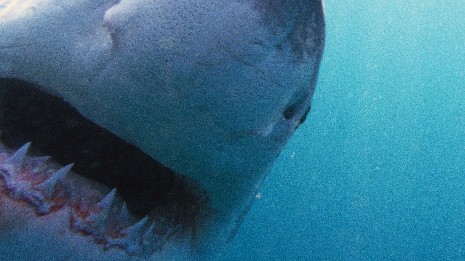 NOVA Season 41 :Episode 20  Why Sharks Attack