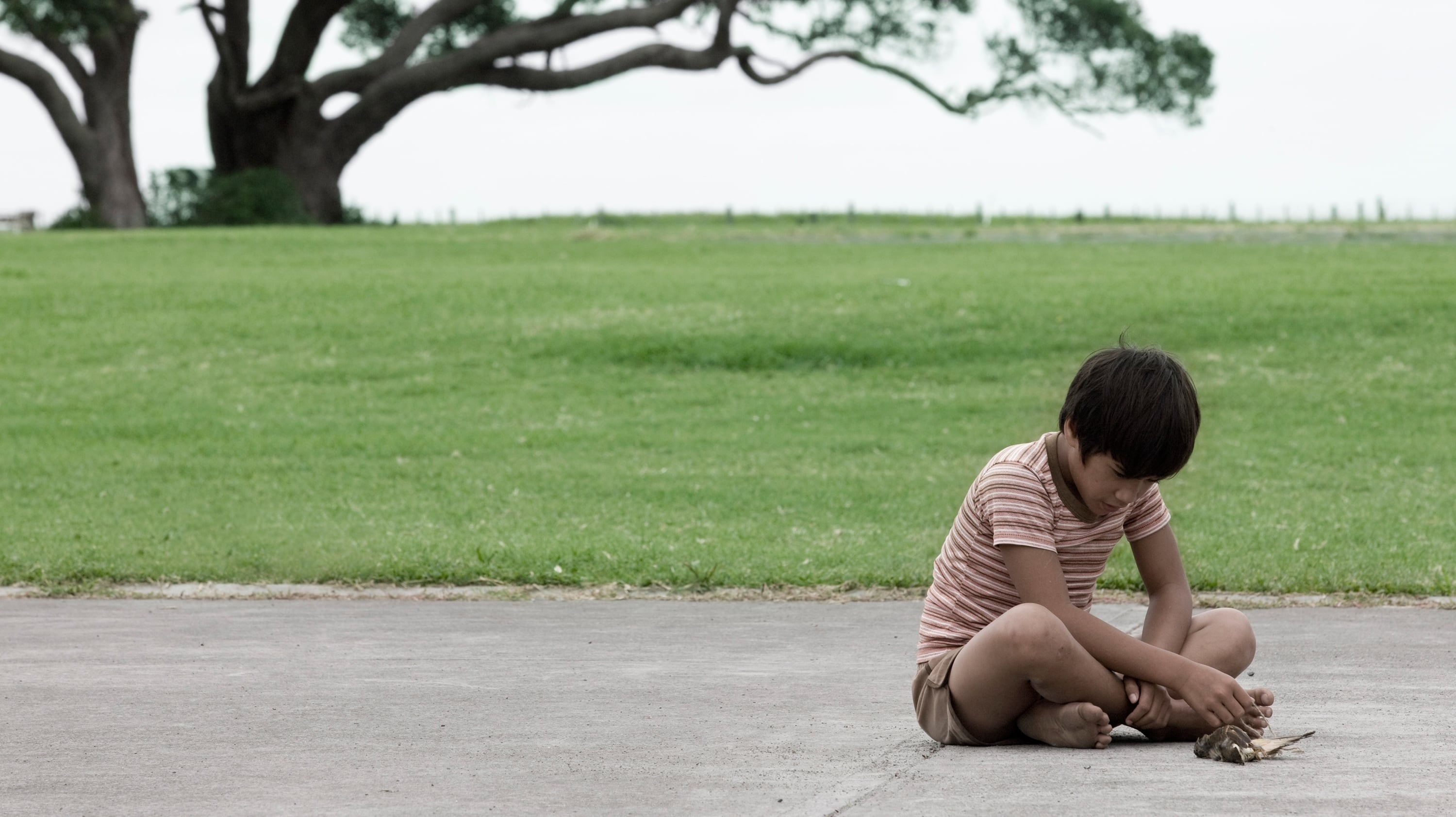 boy by taika waititi Boy is a lovely film, and i think it's true charm lies not just in the hilarious and heartbreaking story, but in the two amazing lead child actors, james rolleston and te aho eketon-whitu.