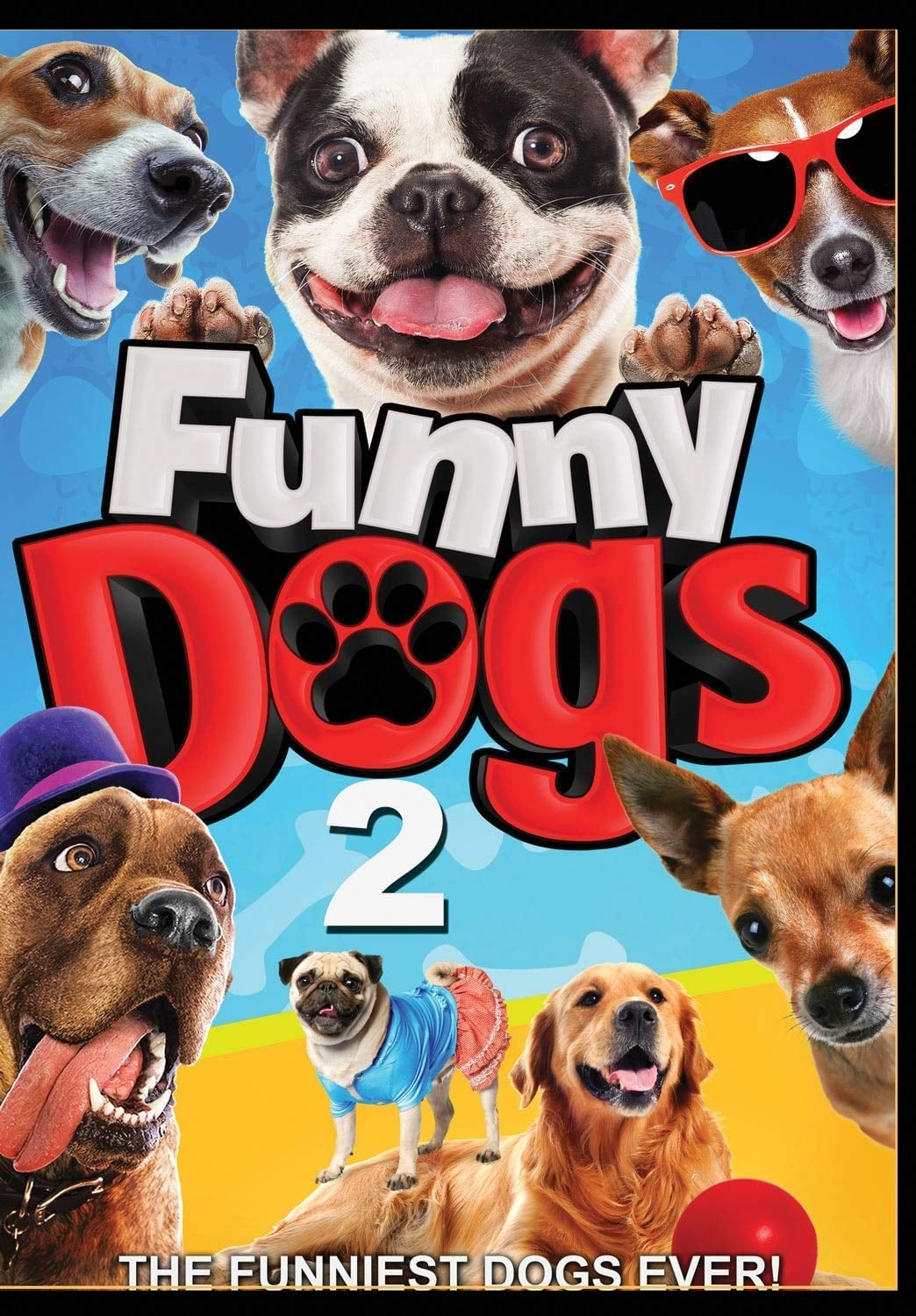 Funny Dogs 2 on FREECABLE TV