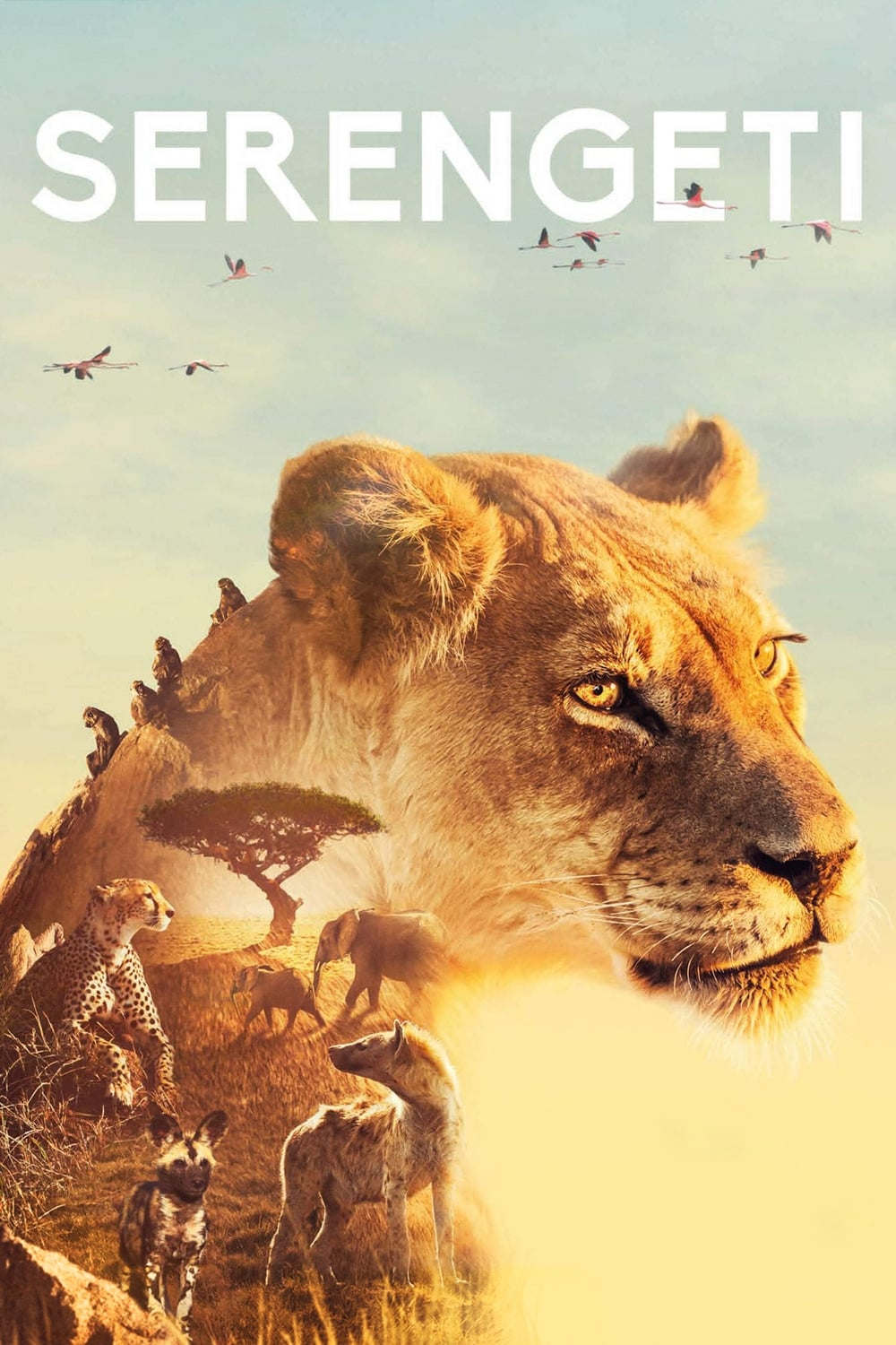 Serengeti TV Shows About Nature Documentary