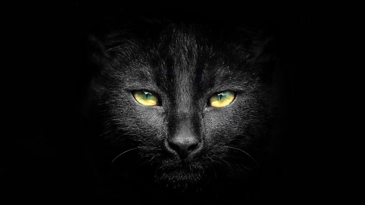cover-Sabrina, cosas de brujas: La película