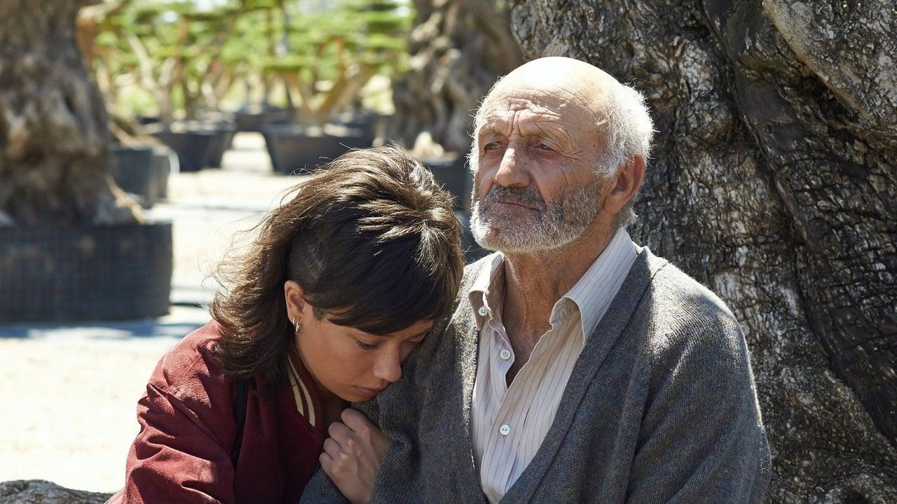 Der Olivenbaum Film