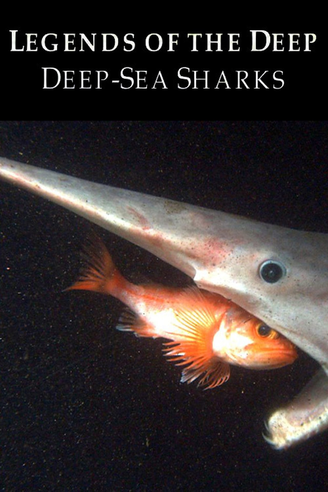 Legends of the Deep: Deep Sea Sharks