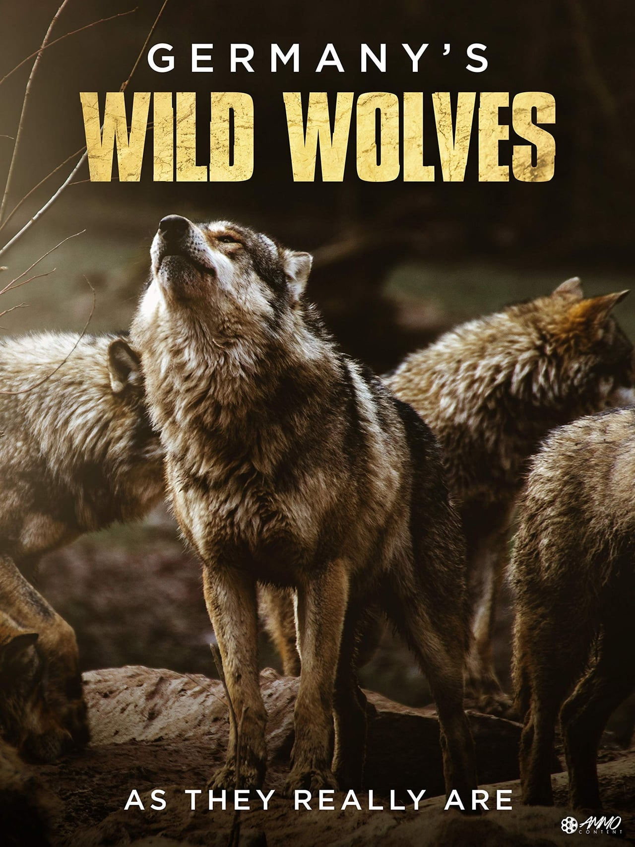 Germany's Wild Wolves - As They Really Are