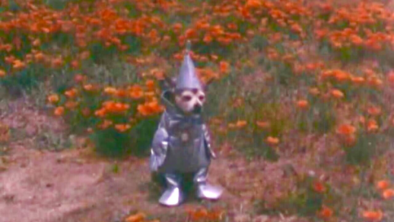 The Tin Woodman's Home Movie #2: California Poppy Reserve, Antelope Valley