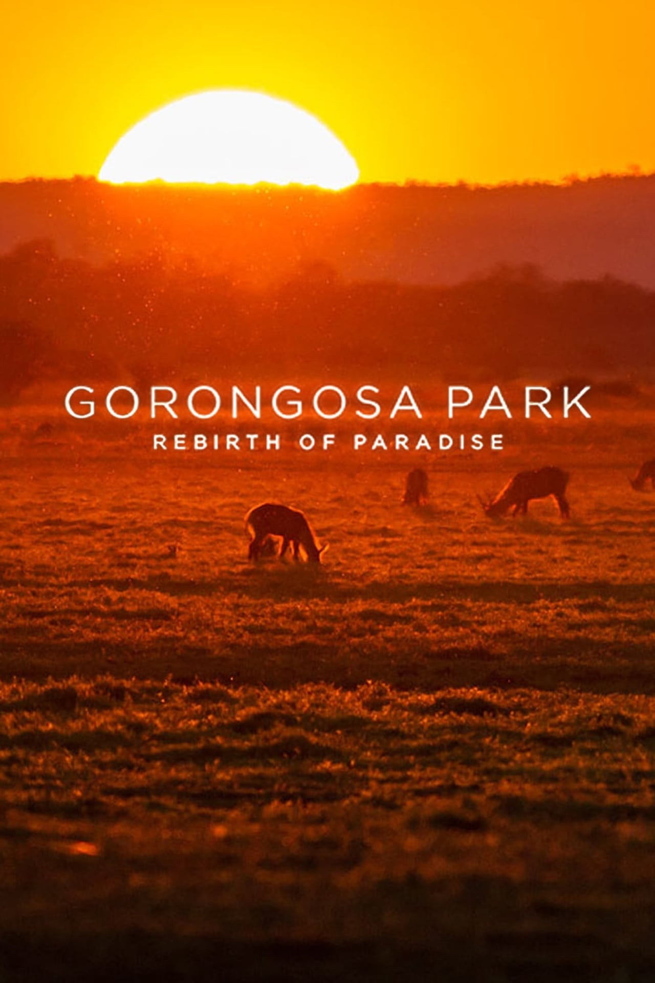Gorongosa Park: Rebirth of Paradise