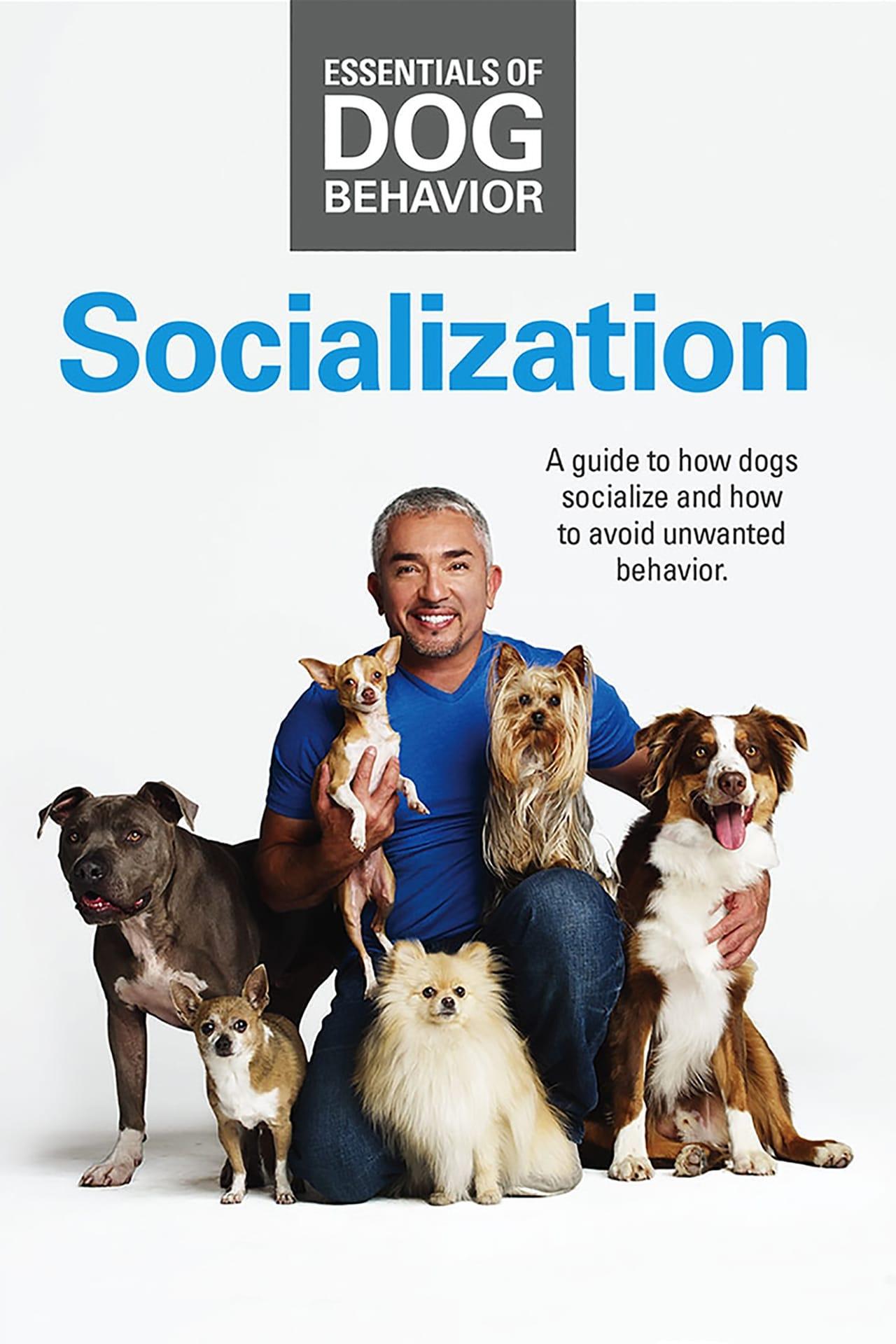Essentials of Dog Behavior: Socialization