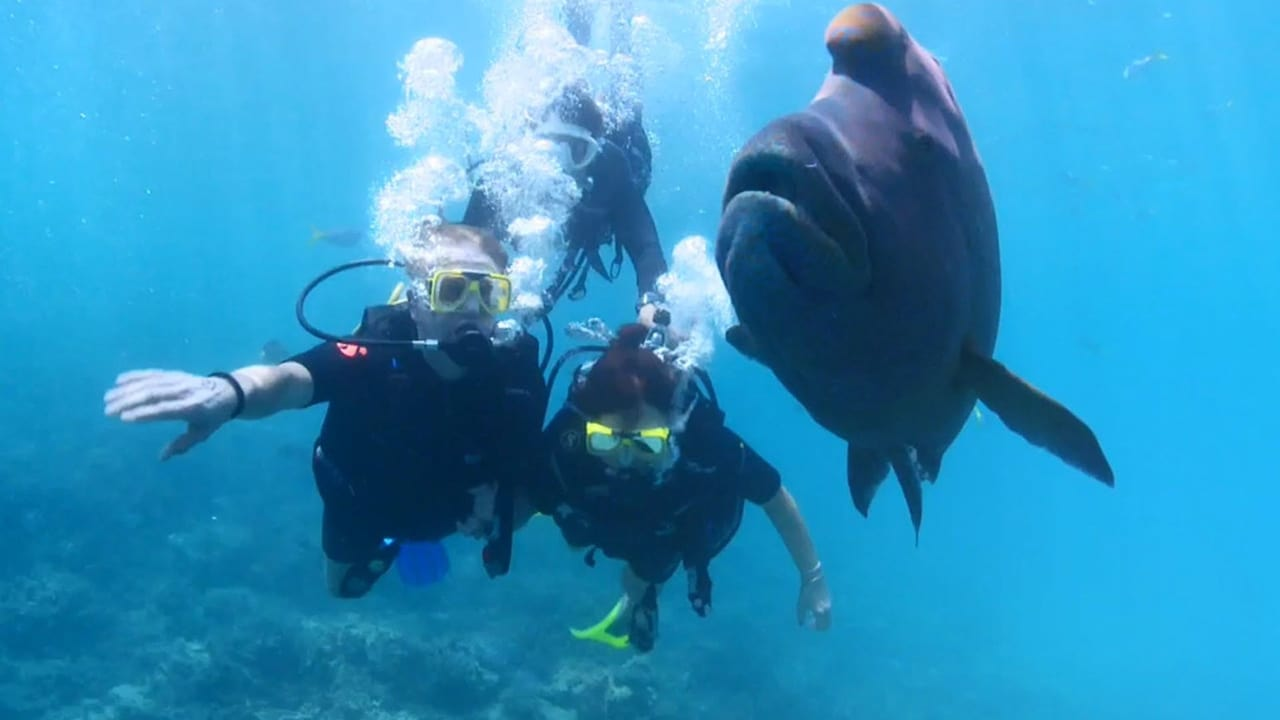 Dive Travel