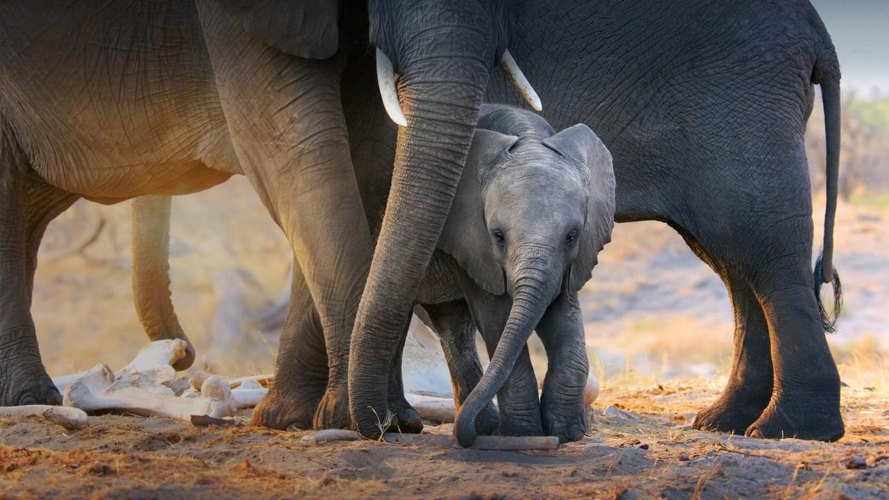 Elephant (2020) Film Online Subtitrat