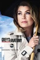 Anatomía de Grey Temporada 12
