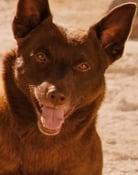 Koko Picture
