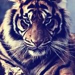 tigru89