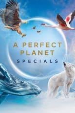 Un planète Parfaite