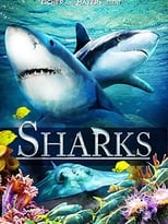 Sharks (in 3D)