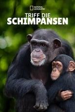 Triff die Schimpansen