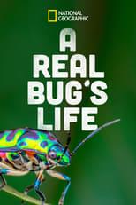 A Real Bug's Life Image
